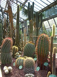 Inside a greenhouse with cactuses at Real Jardin Botanico