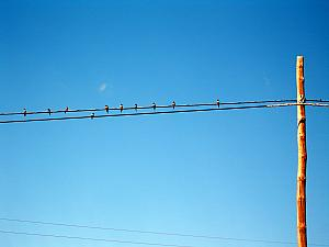Birds on a telephone pole.