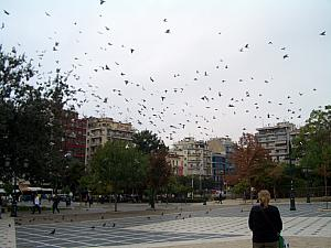 Attack of the birds!!
