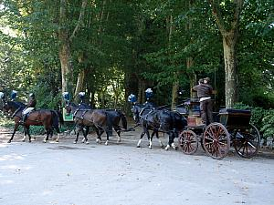 Horses in training at Campo del Moro