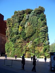 Vertical garden in front of the Caixa Forum