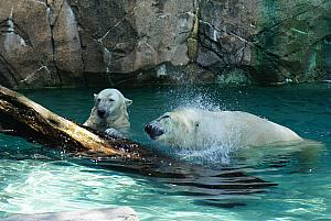 Cincinnati Zoo: cooling off