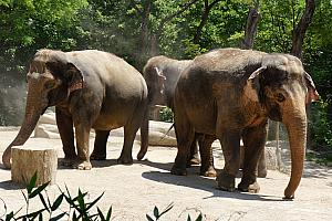 Cincinnati Zoo: elephants!