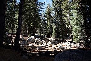 Typical look of the wooded trail. The goal is to hike to Cathedral Lake to see the lake as well as Cathedral Peak. We'll hike 8 miles round trip and go from 8,500 feet elevation to 9,300 feet.