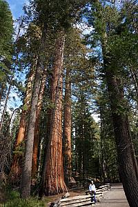 Back at the Mariposa Grove visiting the Giant Sequoias, before we must leave Yosemite. They are so impressive!