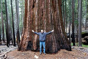 Jay illustrating the diameter of a giant sequoia.