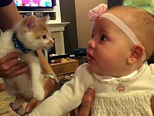Thanksgiving 2014 - Capri meeting a kitten!