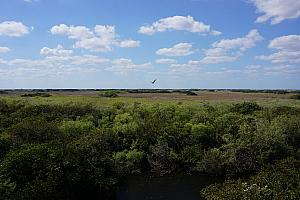 View of the everglades from high atop a 100-foot-high viewing platform.