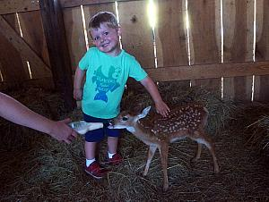 Cooper and the deer