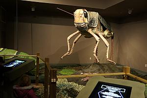 Awesome animated (as in moving) giant insect display at the North Carolina Arboretum