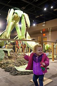Awesome animated (as in moving) giant insect display at the North Carolina Arboretum -- Capri loved it!