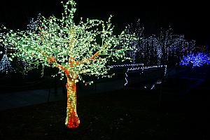 North Carolina Arboretum Winter Lights