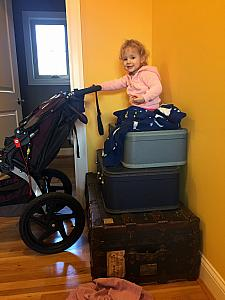 We found Capri atop the stack of suitcases in the mud room!