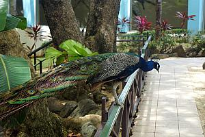 And even a male and female peacock! This guy put on a show for Kelly.