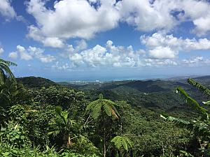 View from within the rainforest looking back to the sea.